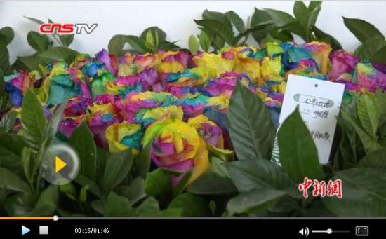 新疆呼图壁苗木花卉博览会 农民年收入超8万元