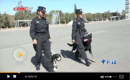 """新疆警队训犬""""姐妹花"""":训犬爱犬盼上勤"""