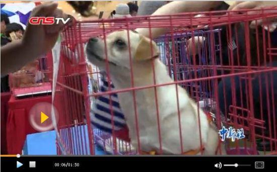 新疆狗狗领养日 领养人需有房有工作条件高