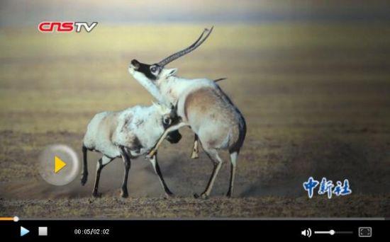 新疆物种多样性之美公益展 珍稀野生动植物亮相市民点赞