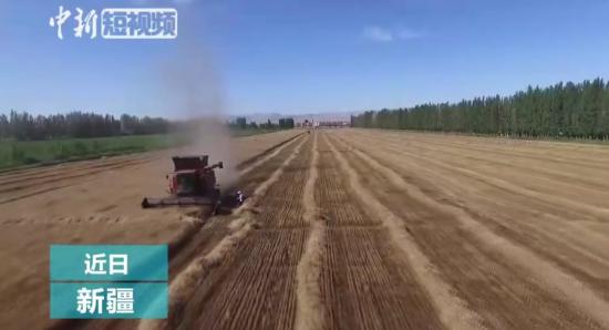 满眼金黄!航拍新疆兵团8万亩小麦机械化收割