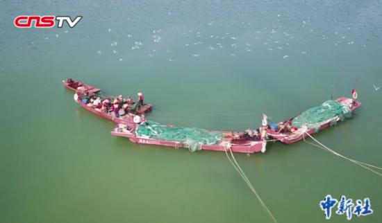 渔民打渔 被千只海鸟包围抢鱼游客尖叫不已