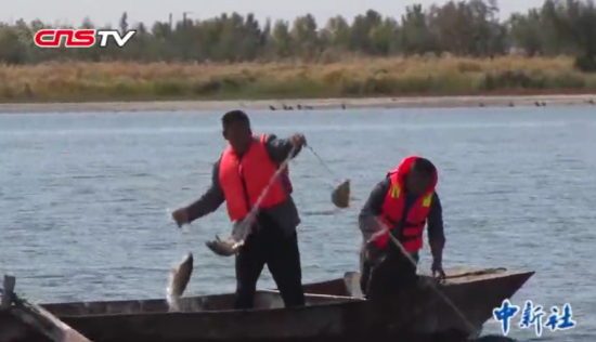 新疆乌伦古湖捕鱼季 旅游+渔业助丰收又增收