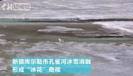"""新疆库尔勒孔雀河现500多米""""冰花""""奇观"""