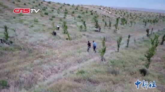 新疆农民发明无灌溉造林技术 专利无偿公开