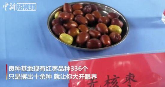 大开眼界!新疆阿克苏十余种红枣引采购商关注