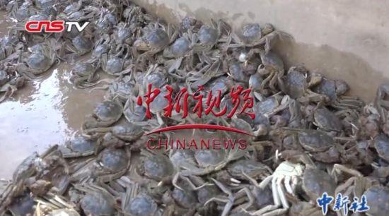 """新疆喀什蟹虾养殖合作社:农民""""变身""""水产养殖技术员"""