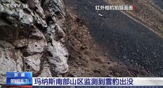 新疆玛纳斯南部山区监测到雪豹出没
