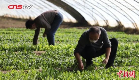 新疆:春耕备耕进行时 防疫不误农事