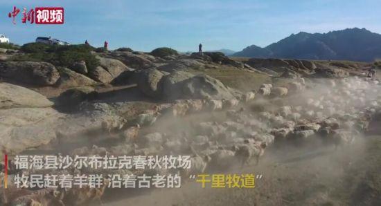 震(zhen)撼!��拍(pai)新疆阿勒泰百�f牲畜大�D��(chang)