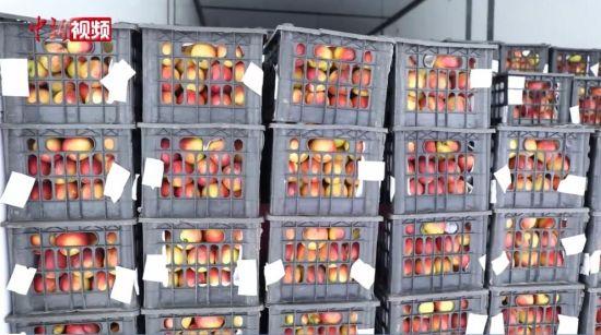新疆果蔬香飘中亚市场
