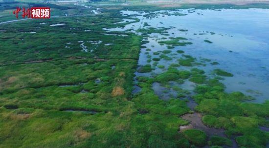 新疆玛纳斯国家湿地公园端午迎客 游客生态旅游过节