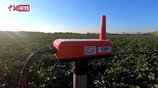 新疆棉农灌溉无农具 智能手机远端实现