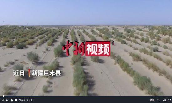 """新疆向沙漠要效益 """"沙漠人参""""助农增收"""