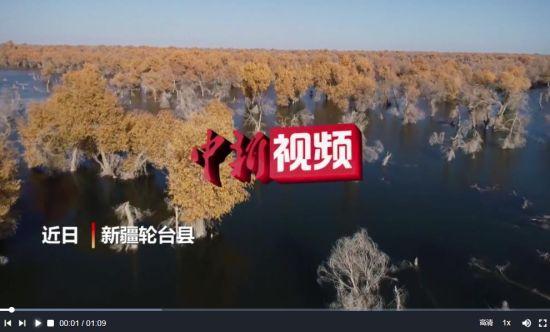 新疆:塔里木河沿岸胡杨林迎来最佳观赏季