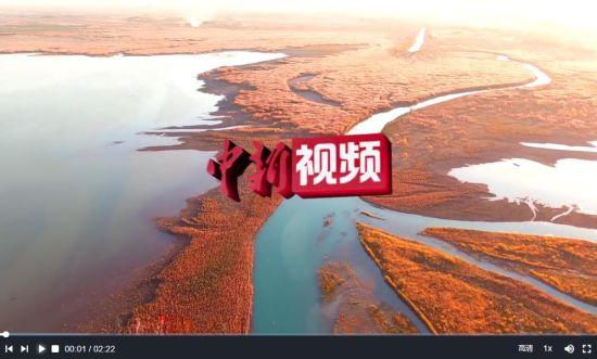 """新疆玛纳斯国家湿地公园成为候鸟""""补给站"""""""