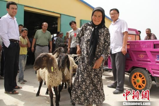 """新疆贫困户领取国家""""扶贫羊"""""""