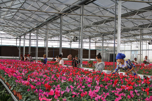 七十团谊群设施农业园区积极为少数民族群众提供就业岗位