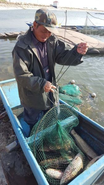 第四师六十七团水产渔业喜获丰收产值达600万