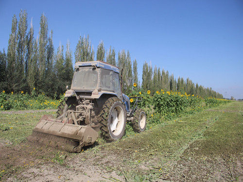二十二团万亩农田茎杆还田 改良土壤