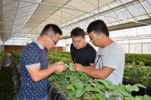 第二师二十九团打造示范园区引领现代设施农业发展