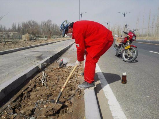 第二师三十六团米兰大道绿化工作正式启动