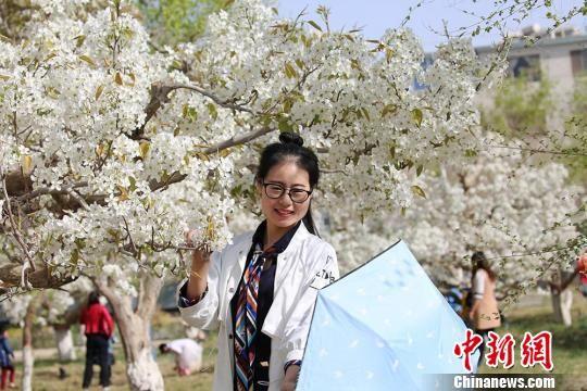 新疆天山南麓万亩梨花绽放 蜂飞蝶舞春意浓
