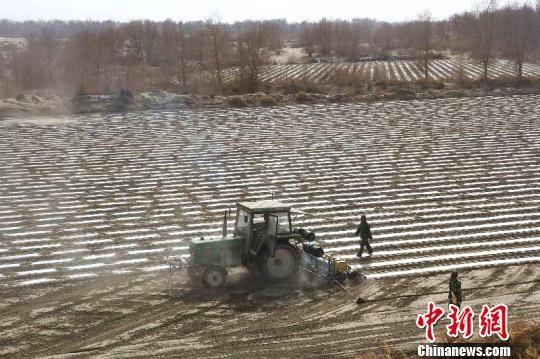 新疆兵团塔里木垦区30万亩棉花播种正酣