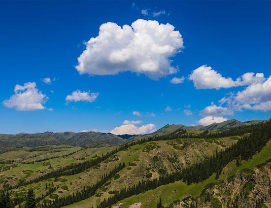盛夏新疆精河林场风景如画惹人醉