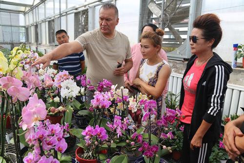 哈萨克斯坦客商与七十团谊群设施农业园区洽谈蝴蝶兰出口业务