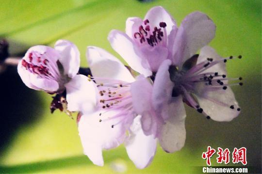 新疆南部万绿竞发露春色