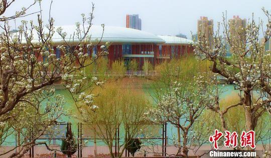 库尔勒天鹅河景区高楼林立,垂柳飘荡,河水与梨花相映衬。 杨厚伟 摄