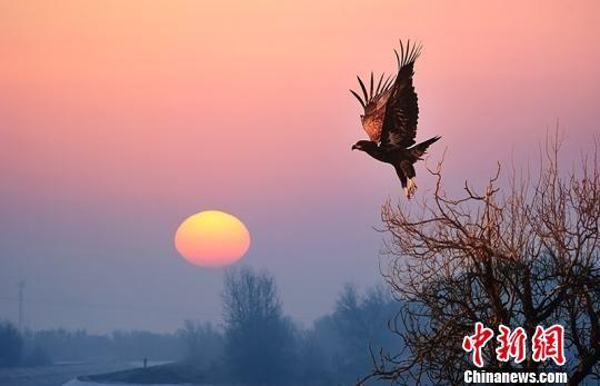 在塔里木垦区,也时常出现鹰的身影。(资料图) 杨邦力 摄