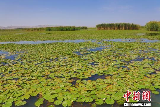 新疆博斯腾湖迎来最佳旅游观光期 怡人风景引客来