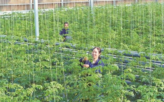 发展设施农业 助力乡村振兴