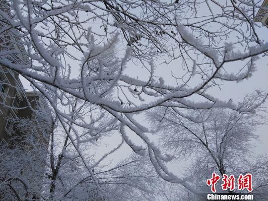 新疆乌鲁木齐现雾凇美景