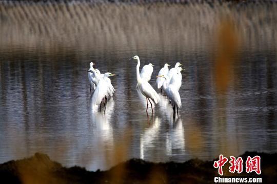 新疆托克逊县白杨河成候鸟天堂