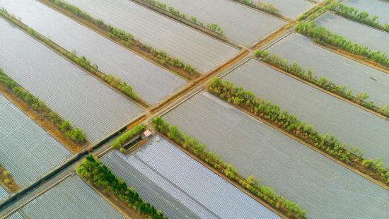 二师三十团:戈壁添美景 荒漠建绿洲