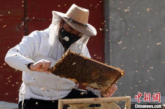 新疆南部:蜜蜂养殖业进入春季繁殖季节