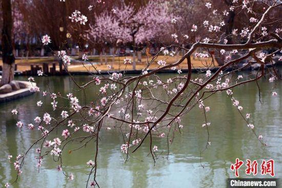 天(tian)�廪D(zhuan)暖,桃花盛�_。 �詈��(wei) �z