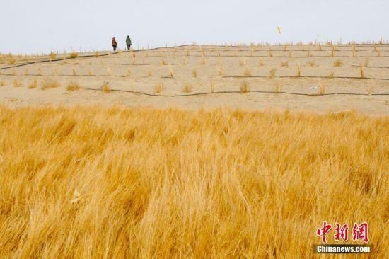 新疆沙漠边城20载治沙路:全民合力构筑绿色屏障