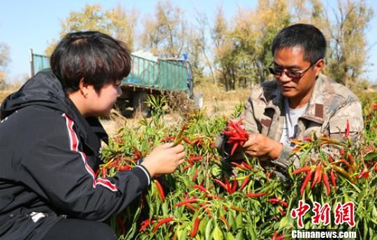 """�乃拇ǖ�(dao)新(xin)疆""""80後(hou)""""小(xiao)伙(huo)�N植(zhi)露地蔬菜�J出(chu)致富(fu)路(�D)"""