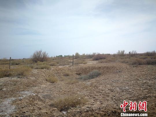 昌吉市北部荒漠区原始梭梭林带。 王小军 摄
