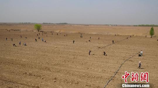 昌吉市植树活动将持续到5月初,直接参与者近20万人次。 牛国华 摄